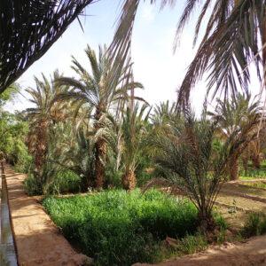 11 Days grand Morocco tours