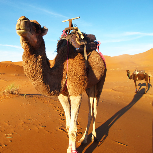 Luxury Tours Into Morocco