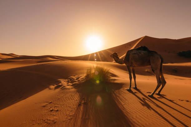 Marrakech to Zagora desert tour 2 days into Morocco